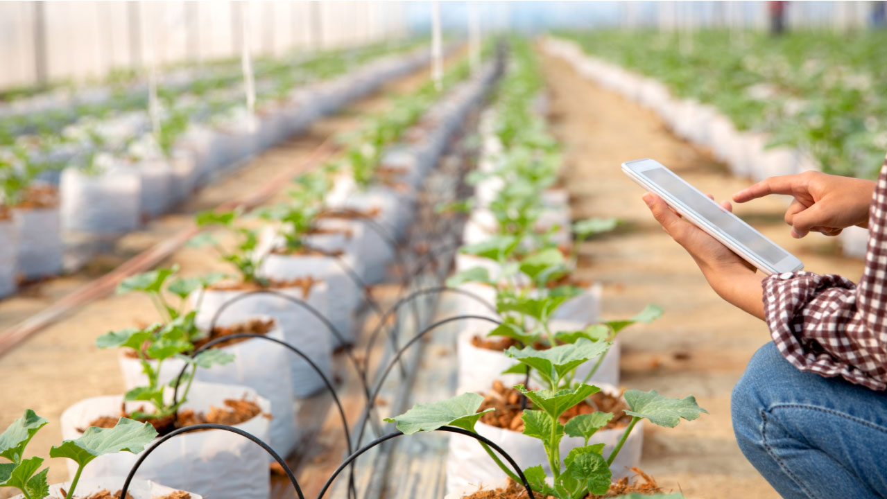 The Farm to Fork Strategy: creating opportunity for local food initiatives
